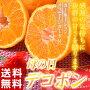 『母の日デコポン』熊本県産糖度13度以上約1.2kg(5〜6玉)カーネーション(造花)+メッセージカード付※常温・送料無料frt○