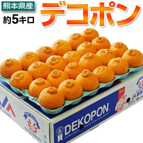 柑橘 みかん 糖度13度選別 熊本県産 デコポン 約5kg 15〜24玉 送料無料