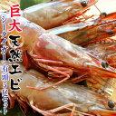 「天然・有頭シータイガー」5尾約500g※冷凍sea☆