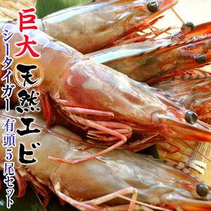 最大級の天然えび シータイガー 有頭5尾 約500g 海老 エビ おせち 冷凍