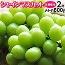 送料無料 ぶどう 長野県産 「シャインマスカット」 2房 計約800g