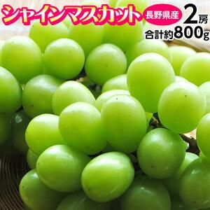 ぶどう ブドウ 葡萄 長野県産 シャインマスカット 2房 計約800g 送料無料