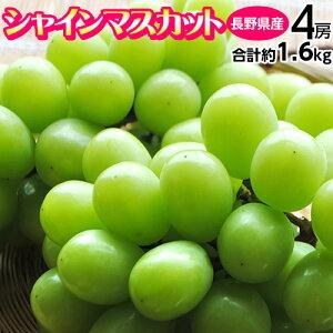 『シャインマスカット』長野県産 4房 計約1.6kg ※常温 送料無料