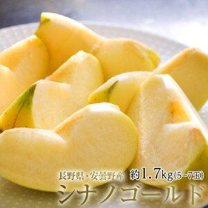 りんご リンゴ 林檎 長野県 安曇野産 シナノゴールド 約1.7kg 風袋込み(5〜7玉) 送料無料