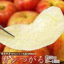 りんご つがる 青森県産 葉取らず サンつがる 正規品 約3kg (目安として7〜15玉) 岩木山りんご生産出荷組合 ※冷蔵 …
