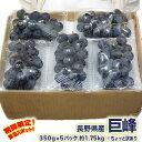 送料無料 長野県 種あり巨峰 約350g×5パック 約1.75kg ※ちょっと訳あり ぶどう 巨峰 ブドウ 葡萄 訳あり まとめ買い