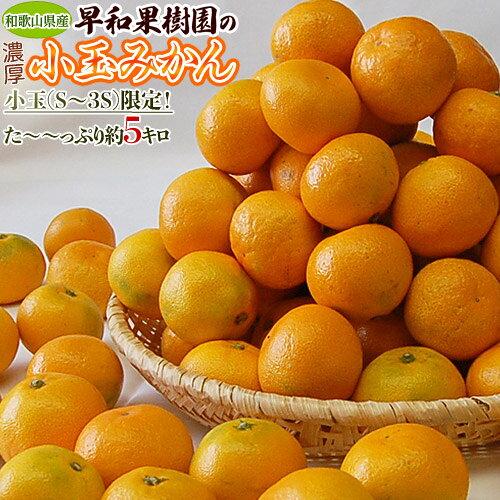 《送料無料》和歌山県産早和果樹園の小玉みかんS〜3S約5kgfrt☆