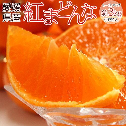 《送料無料》愛媛県産「紅まどんな」化粧箱L〜3L約3kg(10〜15玉)frt☆