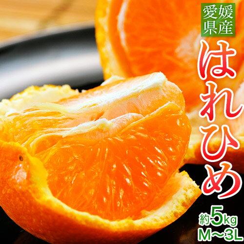 オレンジ みかん 送料無料 愛媛県産 はれひめ 約5kg (M〜3L)