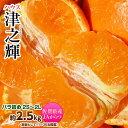 《送料無料》佐賀産「津之輝(つのかがやき)」S〜2L約2.5キロ