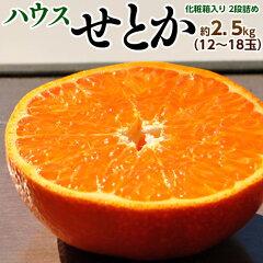 佐賀産ハウス栽培せとか化粧箱12〜18玉約2.5キロ送料無料