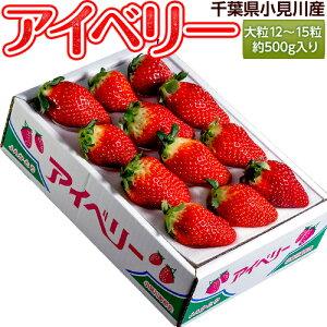 いちご イチゴ 苺 千葉県産 アイベリー 12〜15粒 約500g イチゴ 苺 果物 フルーツ 国産 ギフト 贈り物 プレゼント 贈答 お取り寄せ お礼 お返し 冷蔵 送料無料