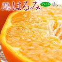 《送料無料》愛媛・三崎産訳あり「はるみみかん」M〜4L約5kgfrt☆