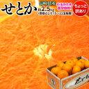 せとか 柑橘 みかん ミカン 蜜柑 長崎産 せとか バラ詰 約2.5kg(目安として15〜22玉) 送料無料