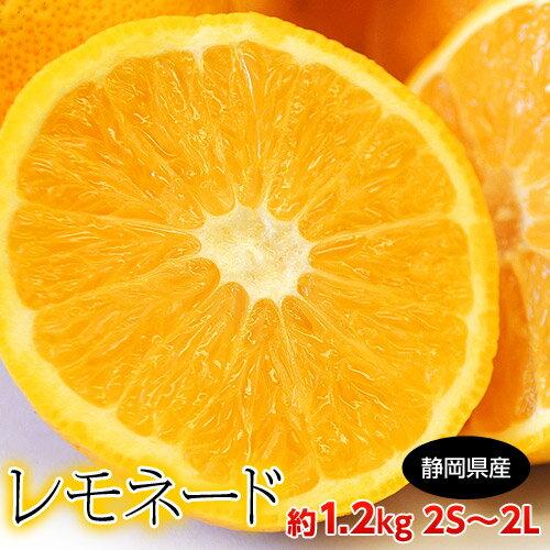 柑橘 静岡県産 レモネード 約1.2kg 2S〜2Lサイズ 常温 送料無料