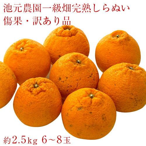 鹿児島県獅子島産 しらぬひ 池元農園一級畑の訳あり品 約2.5kg(6〜8玉) 送料無料