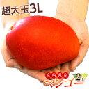 マンゴー 宮崎県産 超大玉 マンゴー 3L ×2玉(1玉:450〜509g) 送料無料