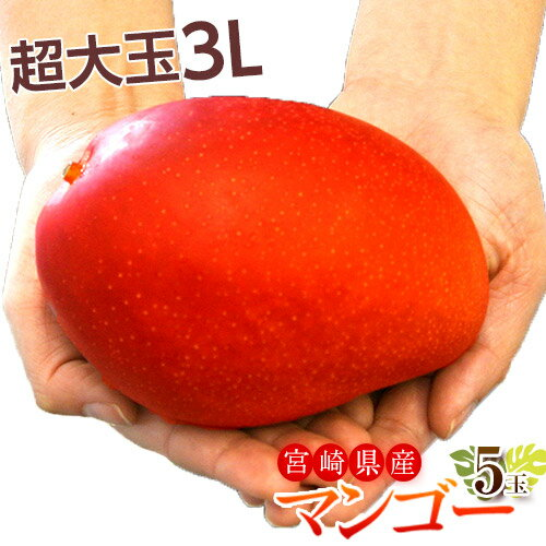 マンゴー 宮崎県産 超大玉 マンゴー 3L ×5玉(1玉:450〜509g) 送料無料
