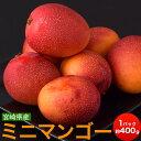 マンゴー 宮崎県産 ミニマンゴー 約400g 目安として3〜8玉 送料無料
