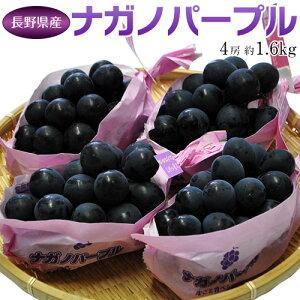 ぶどう 葡萄 送料無料 長野県産 ナガノパープル 4房(合計 約1.6kg)常温又は冷蔵