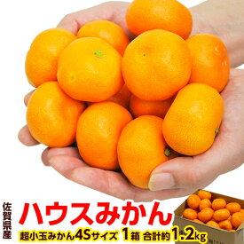 柑橘 みかん JAからつ 訳有 超小玉 4S 約1.2キロ 送料無料
