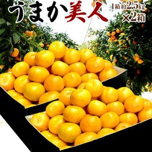 ミカン 高糖度みかん みかん 佐賀県産 JAからつ うまか美人 約2.5kg×2箱 2S〜3Sサイズ 送料無料