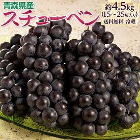 黒ぶどう 『スチューベン』青森県産 約4.5kg(15〜25房) ※冷蔵 送料無料