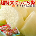 梨 なし 栃木県産 にっこり梨 超大玉 秀品 5〜7玉 約5kg 鮮度保持袋つき 送料無料