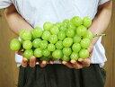 葡萄 ぶどう 山梨県産 超特大 シャインマスカット 1房 約1kg ※常温または冷蔵 送料無料
