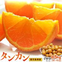 《送料無料》鹿児島県産「露地栽培タンカン」S〜3L約2kg※常温frt◯