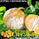 熊本県産 田中雄大さんの パインみかん 約2kg S〜Lサイズ(目安として40〜22玉) ※常温 送料無料