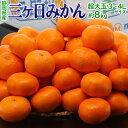 みかん 送料無料 静岡産 三ヶ日みかん 青島種 3〜4Lサイズ 約8kg