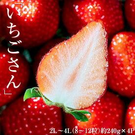 「いちごさん」佐賀県産いちご 2L〜4L (8〜12粒)約240g×4パック ※冷蔵 送料無料【★】#元気いただきますプロジェクト