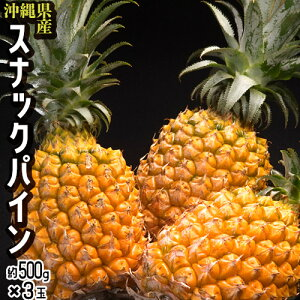パイナップル 沖縄県産 スナックパイン 約500g×3玉 (合計約1.5kg) 送料無料
