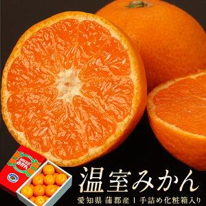愛知県 JA蒲郡市 ハウスみかん 化粧箱 S〜Mサイズ 12〜15玉 約1kg 送料無料