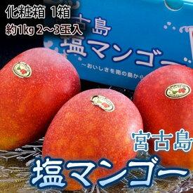 マンゴー 宮古島産 塩マンゴー 化粧箱 約1kg (2〜3玉) 送料無料 ギフト お中元 贈り物