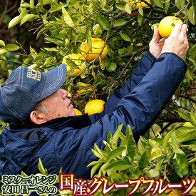 送料無料 熊本県産 安田昌一さんの 完熟 グレープフルーツ ホワイト種 約3kg 8〜12玉 化粧箱 ※常温