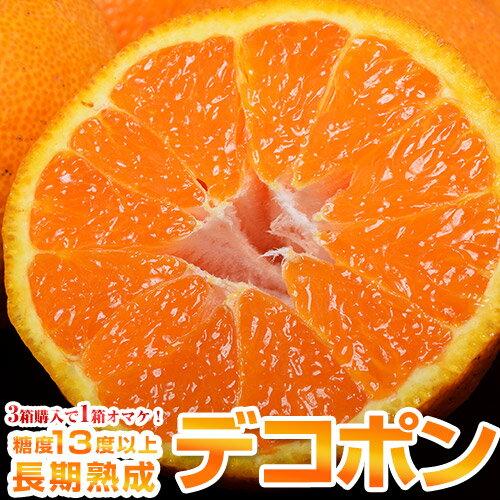 【3箱買えば1箱オマケ】熊本県産 デコポン 秀品 約1.2kg(5〜6玉)※常温 送料無料