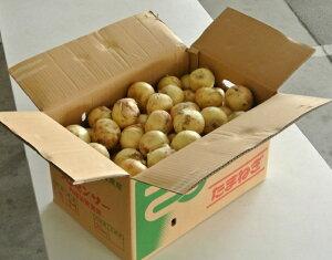 『新玉ねぎ』佐賀県産 風袋込約20kg L〜2Lサイズ 送料無料 ※常温