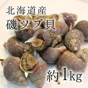 活イソツブ 活磯ツブ ツブ貝 北海道産 高級貝類 1kg [料亭等で使用する質]豊洲直送 朝一入荷した鮮度抜群の【tsubugai_磯ツブ1K】 冷蔵
