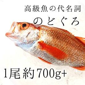 生 のどぐろ 喉黒 赤むつ 特大サイズ (豊洲直送)特大約700-800g 日本海産(鳥取・山口・島根他)アカムツ ギフト 鮮魚 刺身 ノドグロ【nodoguro700-800_生のどぐろ700-800g】 冷蔵