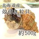 活けの殻付きツブ貝 北海道産 特大サイズ 約+500g/個 築地直送 高級貝類 つぶ貝 粒貝 職人の食材【ツブ貝500g】
