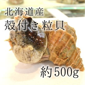 活けの殻付きツブ貝 北海道産 特大サイズ 約+500g/個 豊洲直送 高級貝類 つぶ貝 粒貝 職人の食材【ツブ貝500g】 冷蔵