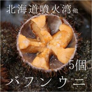 バフンウニ 北海道噴火湾 豊洲直送 5個 生ウニ 鮮魚【バフンウニx5個】冷蔵