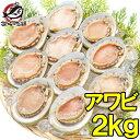 【送料無料】あわび Lサイズ 2kg 合計24個 1箱12個入り 殻つきお刺身用アワビ 高級料亭でも使用する新鮮な殻付きあわ…