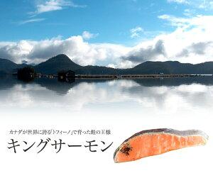 ≪自然の恵み・養殖≫キングサーモン 切り身 1切れ真空パック カナダ/トフィーノで育ったキングサーモン