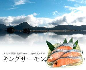 自然の恵み・養殖 キングサーモン切身 1切れ真空パック×4カナダ/トフィーノで育ったキングサーモン