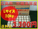 【送料込】世羅高原たまご 白玉 Lサイズ 10Kg詰め (160個)