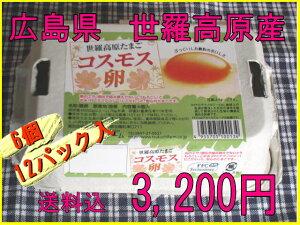 【送料込】コスモス卵 ピンク6個入りパック×12パック☆