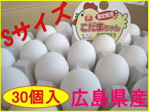 【送料込】Sサイズのたまご こだまちゃん (30個入)☆